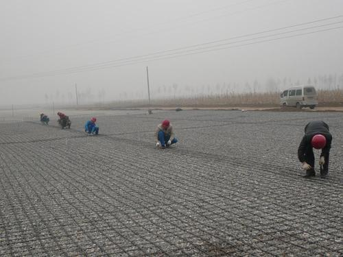 土工格栅在软砂土层中发挥的作用